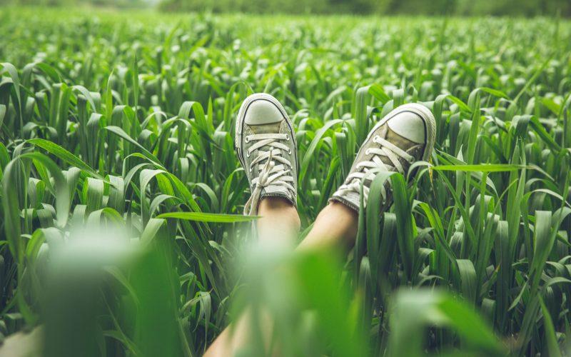 Woman's legs lying in corny field